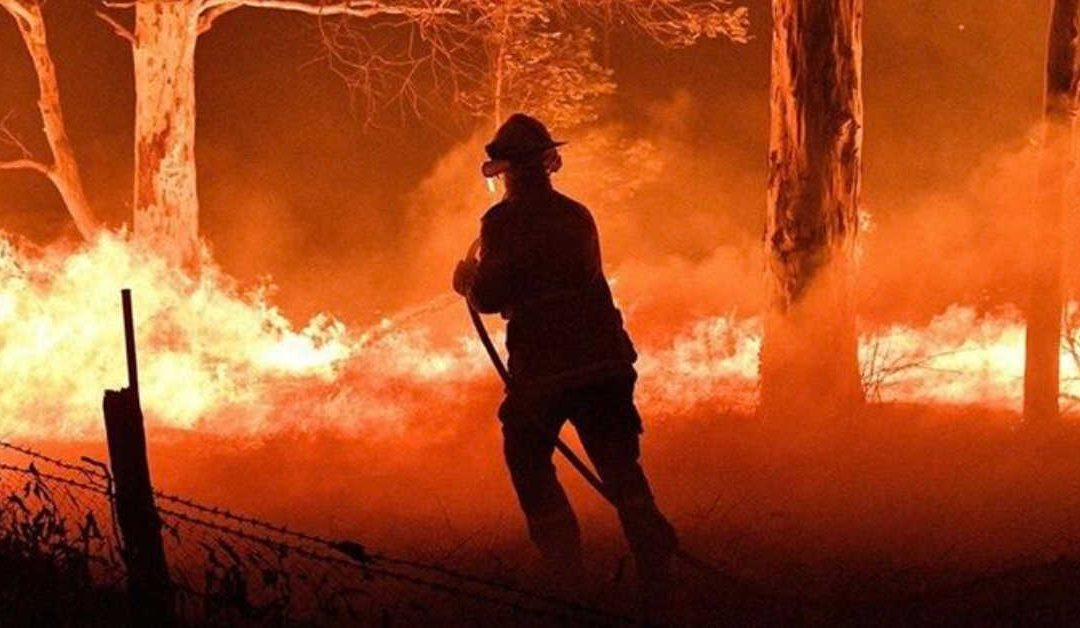 Bush Fire: Road To Recovery