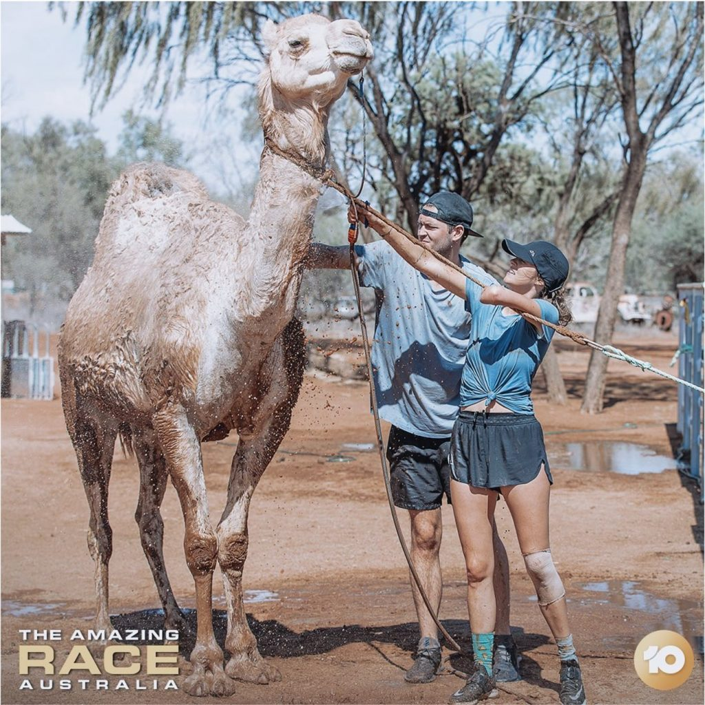 sky-blue and jake working with a camel on the amazing race australia